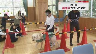 tysnews_盲導犬.jpg