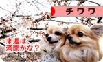 sakura banner.JPG