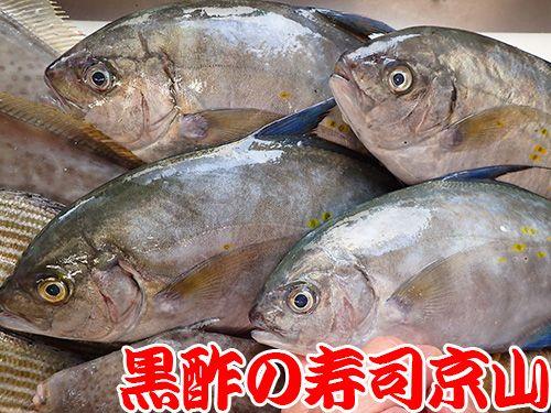 ナンヨウカイワリ 寿司 出前 未利用魚