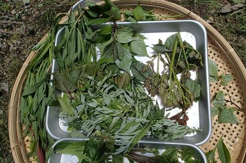 集めた植物