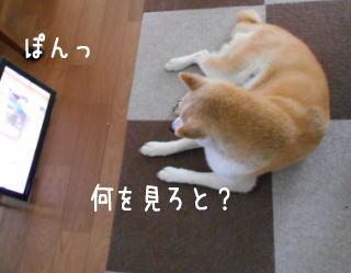 0621テレビ1.jpg