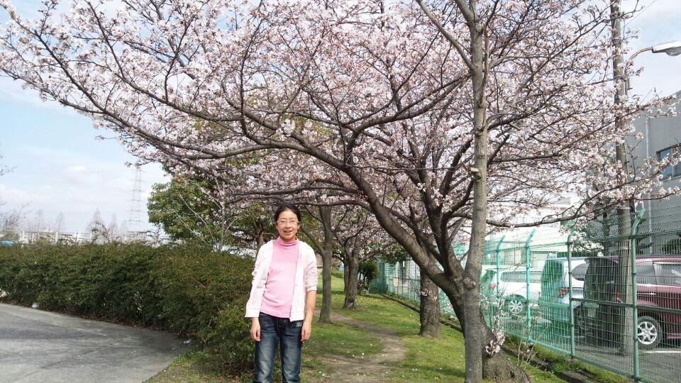 0329 金岡公園桜2