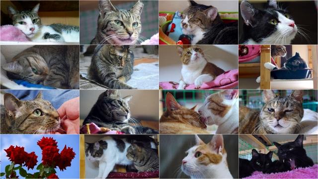 中之島公園の猫たち11.jpg