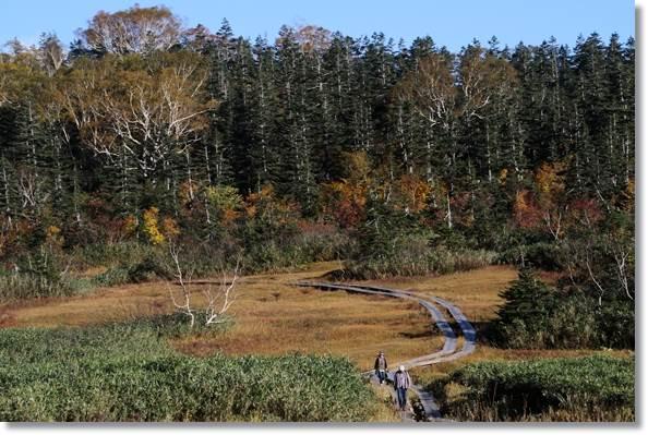栂池自然園-40 15.10.2