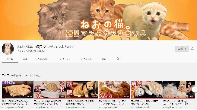 動画 おすすめ 猫