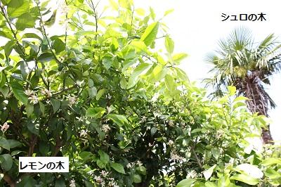 2014_0513_140706-IMG_6421.JPG