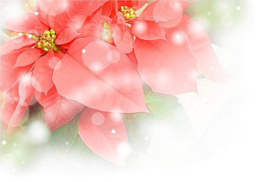 HPブログ用画像 630.jpg