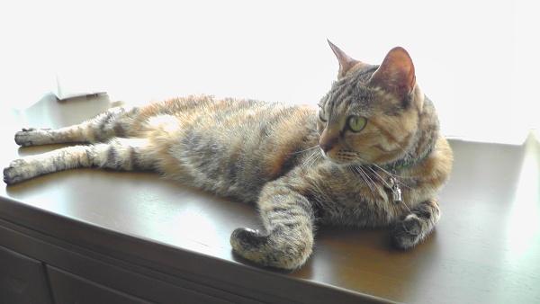 出窓で寝そべる猫