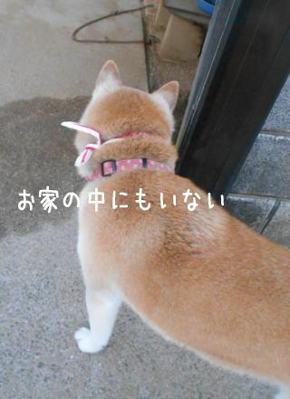 0713トムちゃん1.jpg