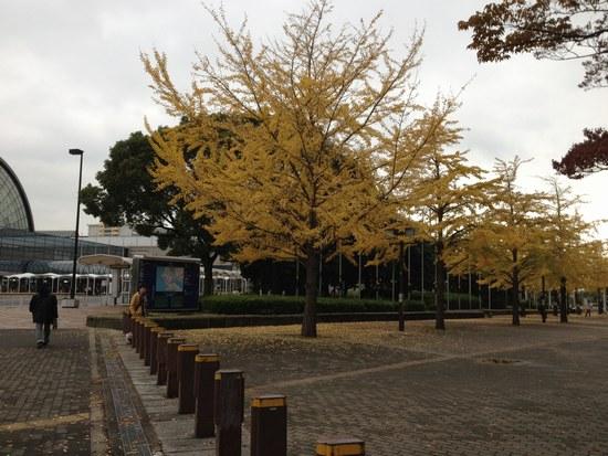 1銀杏の木と4550.jpg
