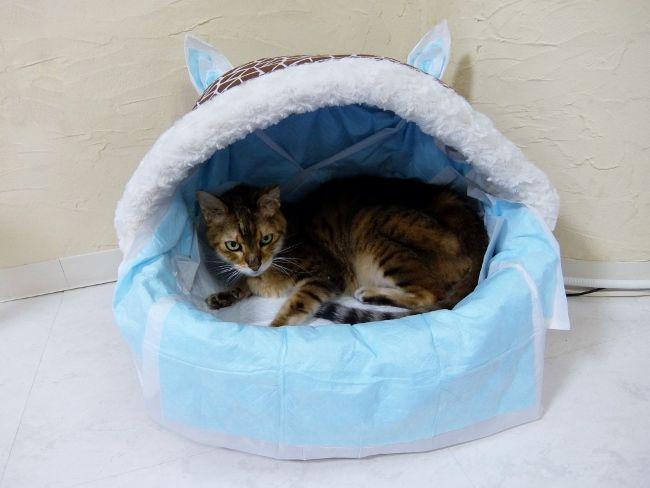 猫 リンパ腫 下痢 下血 ねこ 消化器型