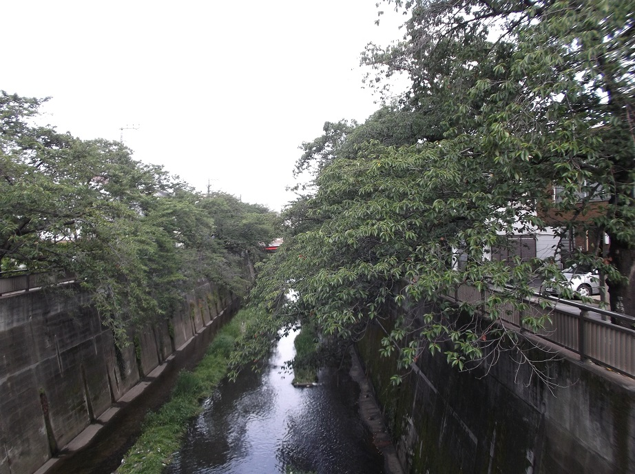 石神井川061505.jpg