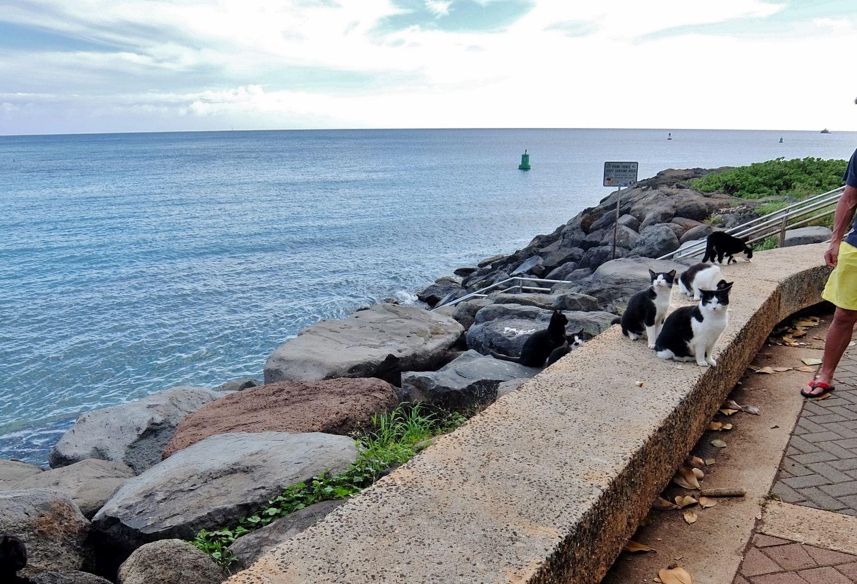 ハワイ インスタ カカアコ ウォーターフロント パーク スポット Kakaako Waterfront Park ねこ