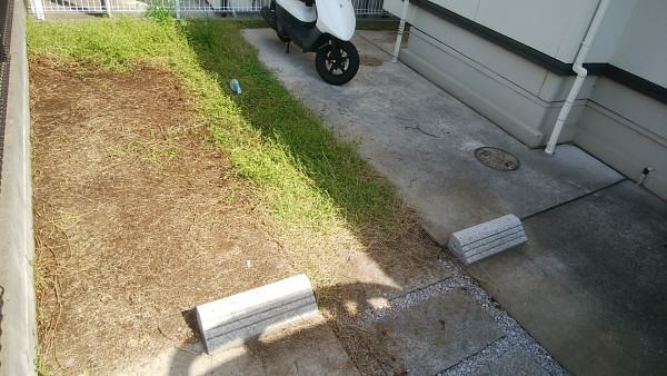 駐車場のコンクリートを覆っていたイワダレソウ(クラピアS1)を剥がす