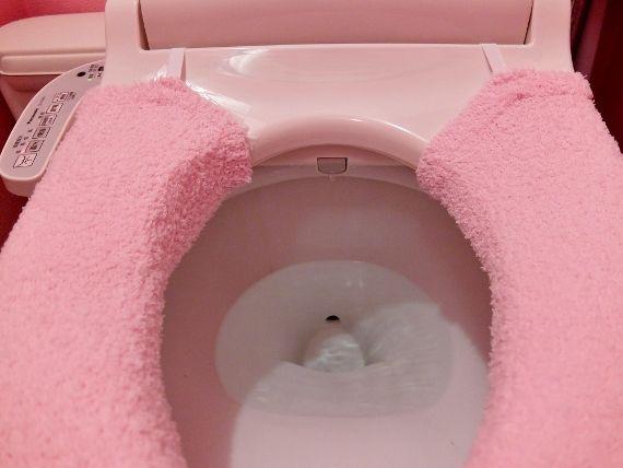 猫 ねこ ネコのトイレ  水洗トイレで 人間のトイレ