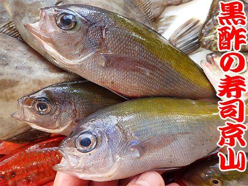 ウメイロ 寿司 出前 未利用魚