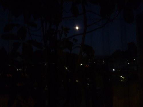 1アボカド夜景色2500.jpg