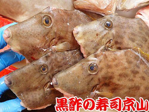 寿司 出前 新宿区 榎町