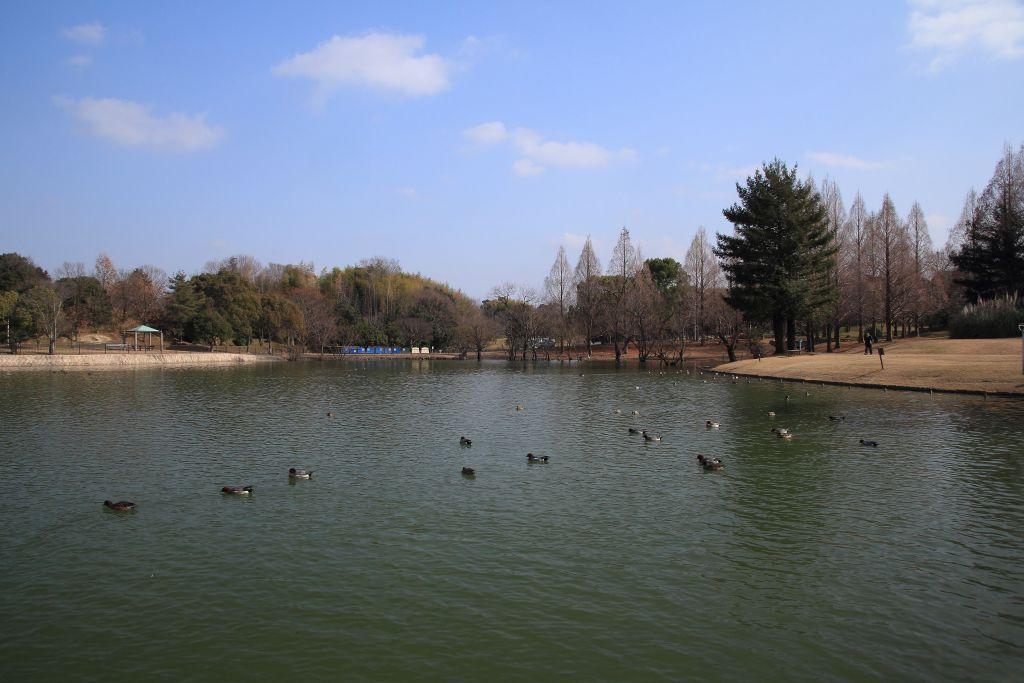 公園 蜻蛉 池 2021年 蜻蛉池公園