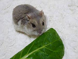 ムーン君と小松菜