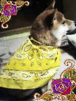 rblog-20130531000945-00.png