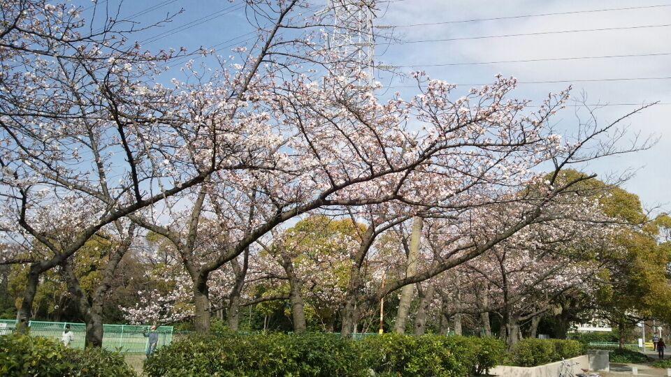 0329 金岡公園桜