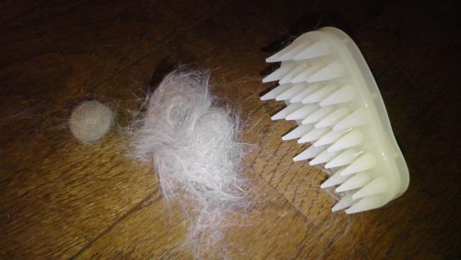初回なので大量に毛が抜ける