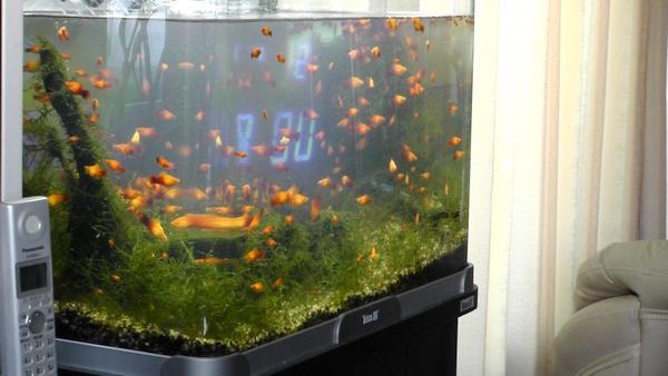 熱帯魚 水槽 濁り にごり