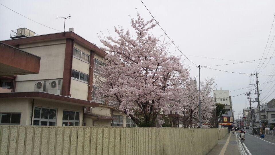 0402 桜