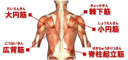 musclechart-back.jpg