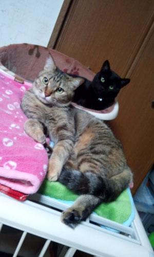141225-hime&yuzu1.jpg