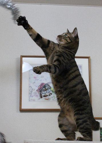タワー猫4.jpg