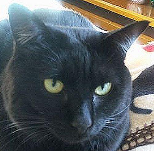黒猫くるみちゃんからお勧めグッズ