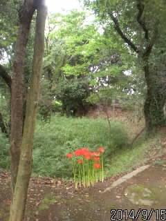 稲荷神社の堀