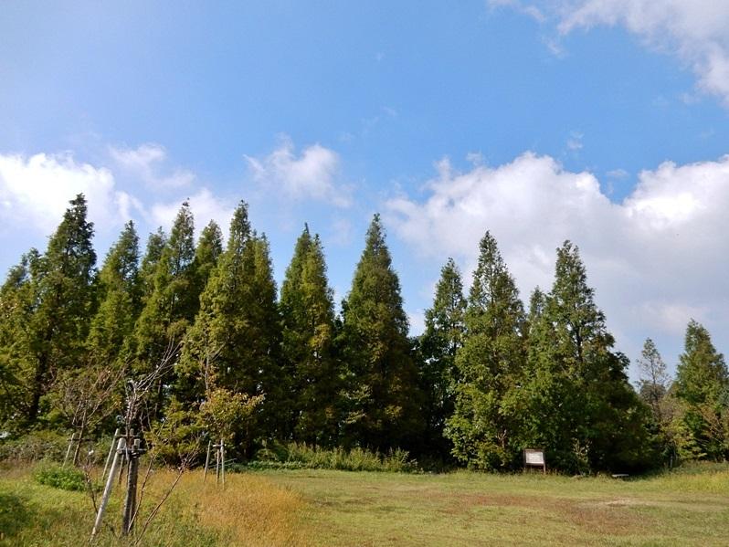 多目的広場6.JPG