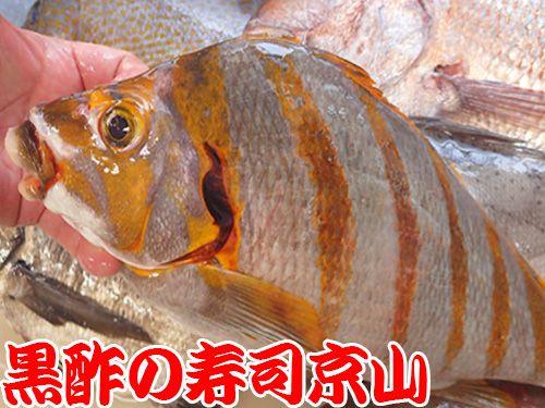 寿司 出前 港区 南青山