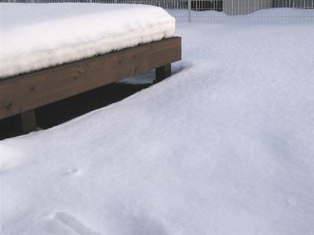 庭の雪参考画像1