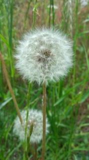 flower of hope.jpg
