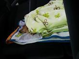 車内のレオ.JPG