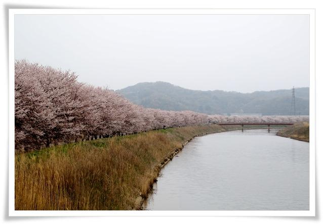 森下川-4 16.4.10