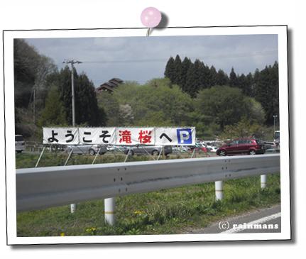 滝桜6.jpg