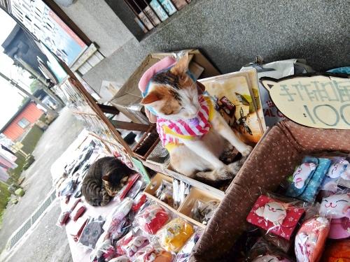 侯? 台北 台湾鉄道 猫村 世界6大猫スポット CNN
