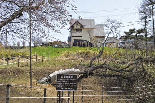 11寝てる桜.jpg