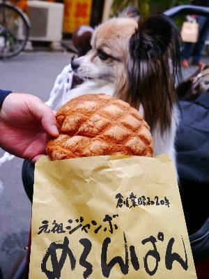 2012浅草4月8.JPG