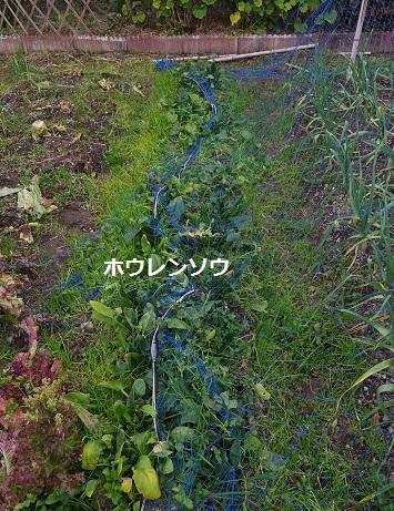2015_0110_104648-IMGP3659.JPG