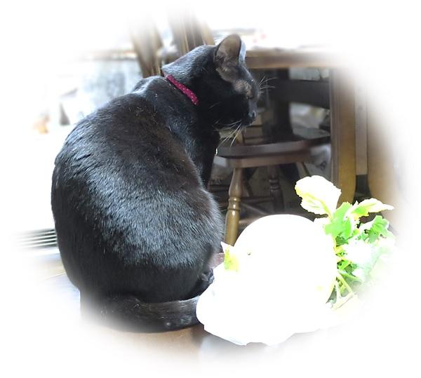 黒猫チャンプとかぶ.jpg