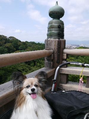 2012京都夏12.JPG