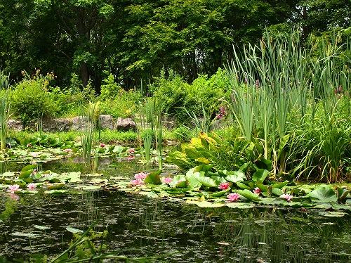 2012紫竹・池.jpg