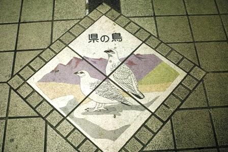 4富山県の鳥.JPG