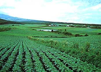野辺山高原野菜栽培地一望